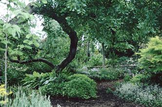 Front woodland garden entrance under arched oak - 1999