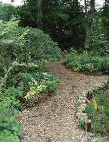 Front woodland garden path by bog garden - 1999