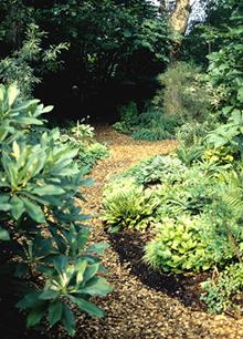Woodland garden path - north of bog garden - 2000