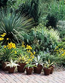 Southwestern pation garden - 2005