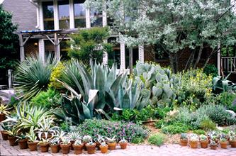 Southwestern patio garden with agave collection - 2006