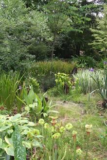 Bog garden toward west - 2008