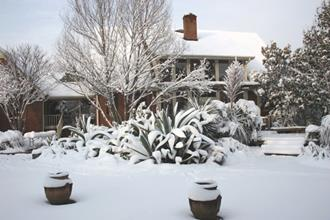 Southwestern patio garden snow - 2009
