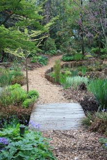 Bog garden toward west - 2010