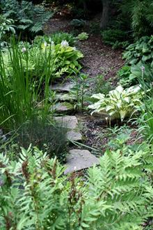 Bog garden over stepping stones