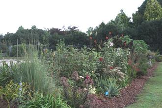 Souto garden west perennial border