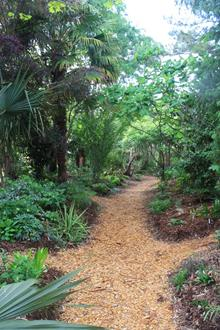 Hardy tropical garden path looking north