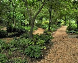 Woodland garden path toward arched oak