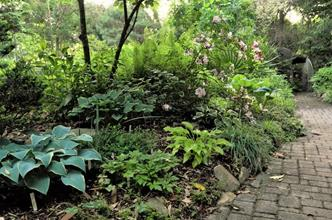 Grotto garden pathway by hostas