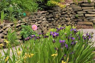 Sunken rain garden, water iris display
