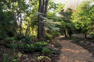 Woodland garden near gazebo
