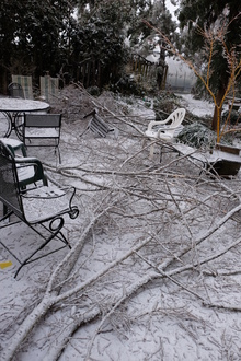 2016 snow - 9241 patio with downed limbs due to ice